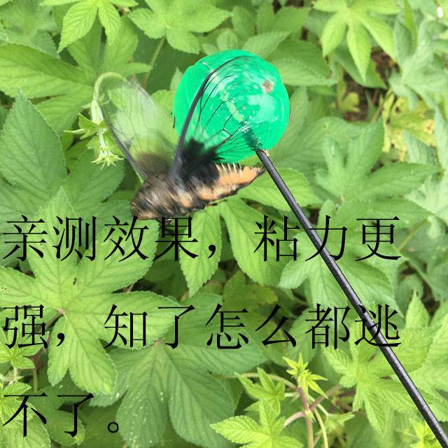 抖音抓粘知了 粘球知了杆竿 精品改良版胶状捕捉蝉工具抓知了神器