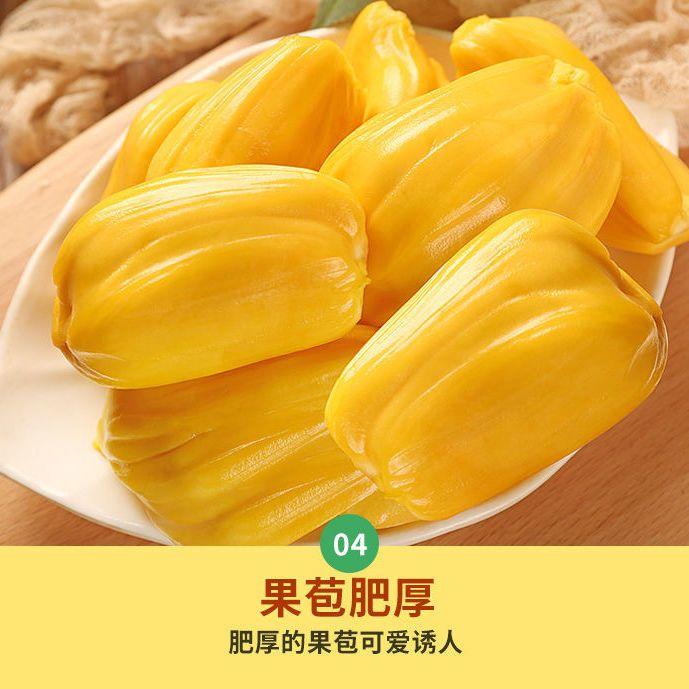 现摘发货海南三亚菠萝蜜新鲜水果当应季一整个黄波罗蜜批发非红肉主图5