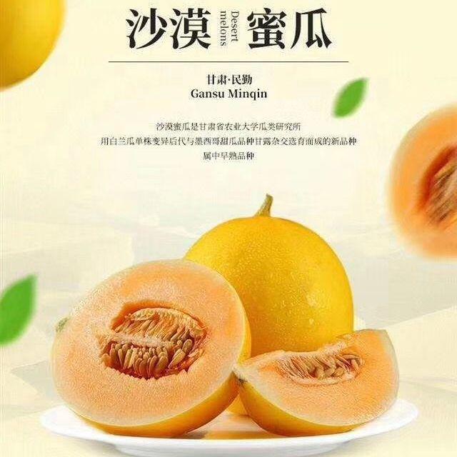 黄河蜜瓜金红宝哈密瓜甘肃民勤大漠田园黄金蜜瓜开始发售