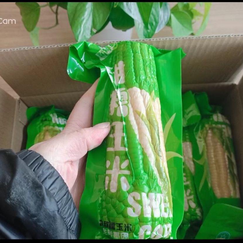 【10支大棒】白甜玉米