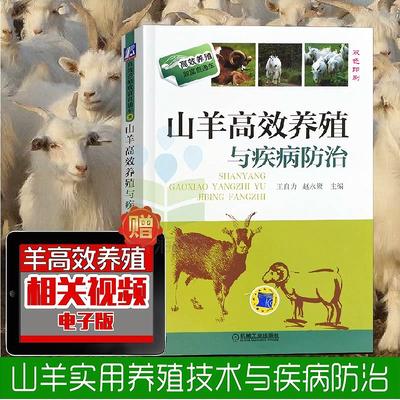 山羊高效养殖与疾病防治 养山羊技术大全书籍 山羊疾病预防诊治