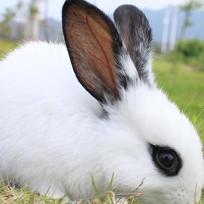 科学养兔技术大全 家兔獭兔肉兔养殖 兔子疾病防治视频9光盘1书籍