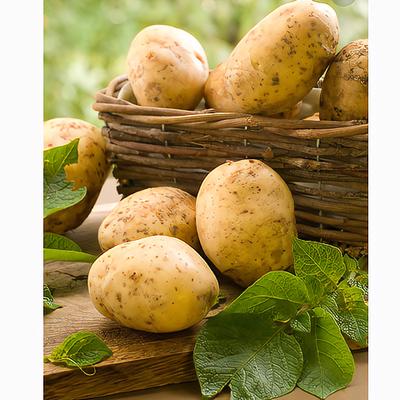 自学马铃薯栽培技术视频教程高产土豆栽培视频教程教材6盘1书籍
